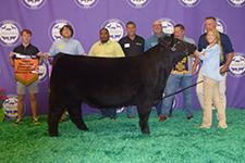 Michigan Livestock Expo | Results